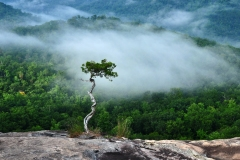 Gentle Guardian at Looking Glass Rock